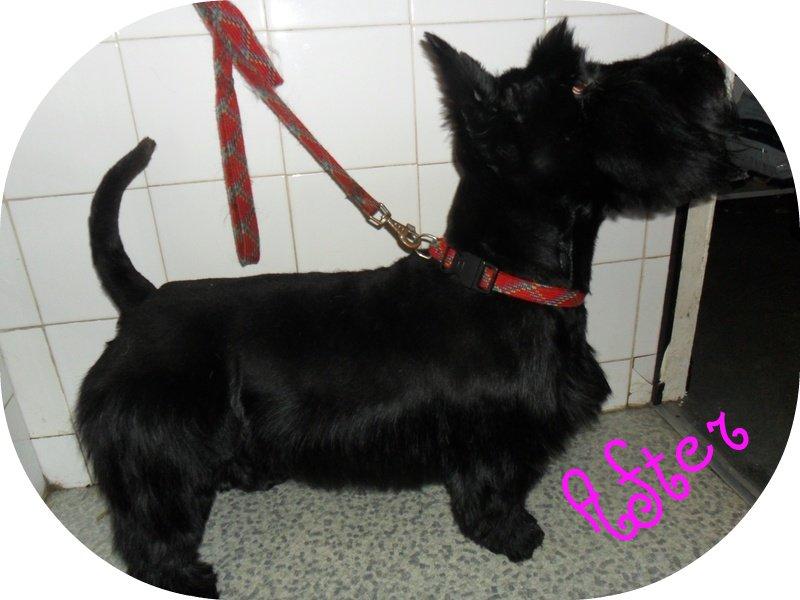 Dog Agility Training Videos